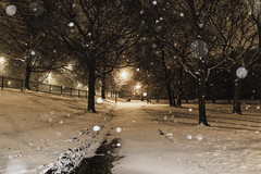 Freezing paths (aerojad) Tags: eos canon 80d dslr 2019 chicago urban snow snowing winter february bokeh snowkeh outdoors city night nightphotography nightscape winterscape snowscape