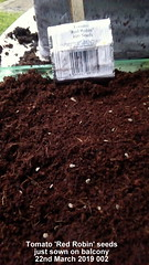 Tomato 'Red Robin' seeds just sown on balcony 22nd March 2019 002 (D@viD_2.011) Tags: tomato red robin seeds just sown balcony 22nd march 2019