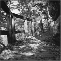 When You Feel Alone In The World (Koprek) Tags: rolleiflex28f fomapan 100 trakošćan croatia autumn film 6x6 analog medium format october 2018