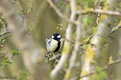 J78A0168 (M0JRA) Tags: robins birds humber ponds lakes people trees fields walks farms traylers