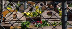 20190324-10-19-51 (andreas_rothmund) Tags: badenwürttemberg bodensee deutschland mainau konstanz
