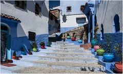490-EL COLORIDO DE XAUEN - MARRUECOS - (--MARCO POLO--) Tags: calles ciudades exotismo marruecos escaleras
