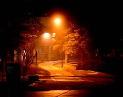 Everything looks mysterious at night. (Jane Olsen) Tags: night streetlights pathway trees dusk outdoor winter fog