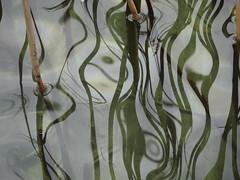 DSC01516 (MetroIsha) Tags: water reflection abstract mirror spiegelung