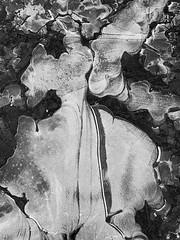 Frozen water..... #ShotoniPhone #Shotoniphonexsmax #Winter #Water #Black&white #Abstract #Nature #Pattern #Amateurphotographer #Mobileshooter  #Ayrshire #Scotland (Paul McF-Photography) Tags: shotoniphone shotoniphonexsmax winter water black abstract nature pattern amateurphotographer mobileshooter ayrshire scotland