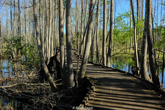 boardwalk (Brian Eagar Nature Photography) Tags: landscape swamp boardwalk georgia stephencfosterstatepark statepark fuji xf23f2 xf23 xf23f2wr xt2 fujixt2 fujifilm