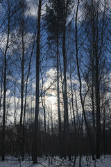 Winter landscape / Зимний пейзаж (dmilokt) Tags: природа nature пейзаж landscape лес forest дерево tree дорога road dmilokt nikon d850