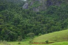 A mata sobe a montanha (Márcia Valle) Tags: márciavalle nikon d5100 brasil minasgerais brazil verão summertime landscape paisagem montanha mountain floresta forest brazilianflora