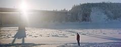 Yukon River Bridge (musubk) Tags: film analog kodak alaska winter cold snow snowy panorama large format 4x5 2x5