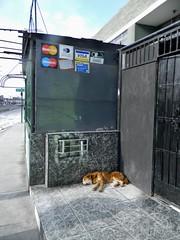 Peru 3 519 (burbadj) Tags: peru dog siesta lima