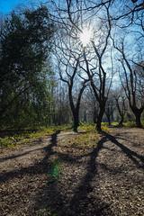 light and shadow (karina Novakova) Tags: forest colour colours light shadow sun sunstar moody atmosphere nature portrait landscape landscapes
