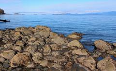 Winchelsea Views (21mickrange) Tags: nanaimo vancouverisland hammondbay sealandpark salishsea pacificocean winchelseaislands texada lasqueti beach trees douglasfirs bigleafmaples coastmountains britishcolumbia