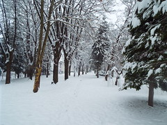 An then came the snow.... Petrinja Croatia January 2019 (sean and nina) Tags: petrinja croatia croatian hrvatska winter january 2019 cold bitter snow frost white fall snowfall trees ground street outdoor outside sky buildings public park nature branches abandoned empty storm