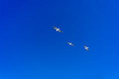 Unchained (emiel bleidd) Tags: roja sea seagull blue ocean bird birds composition nature naturephoto naturephotography 3 free wild landscape landscapephoto gaviotas beach playa oceano azul naturaleza fotografiadenaturaleza sony sonya7ii a72 a7ii