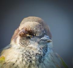 Interesting. (Omygodtom) Tags: doubleexposed wildlife bird scene nikon70300mmvrlens flickriver d7100 dof portrait photographer lowkey existinglight