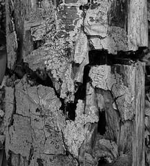_A172887_E (☁ ▅▒░☼‿☼░▒▅ ☁) Tags: olympus omd em5mkii minolta rokkor mecsek woods forest black white blackwhite