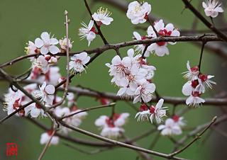 """""""Amour et les fleurs ne durent qu'un printemps."""""""