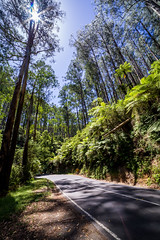 Bursting through (Jared Beaney) Tags: canon6d canon australia australian photography photographer travel victoria yarraranges blackspur drive road forest narbethong healesville sunburst bush landscapes landscape