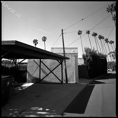 Leaning palms skywriting (ADMurr) Tags: la leaning palms southerly skywriting empathy hasselblad 500cm 80mm zeiss planar bw black white film 6x6 square dba620