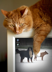 windows explorer (patrick.verstappen) Tags: cat dog animal belgium d7100 sigma winter flickr facebook gingelom google ipiccy gato perro foto sueño animales fantasía chat chien photo rêve animaux fantaisie 猫,狗,照片,梦想,动物,幻想 katze tiere dream felix fantasy daiko sweet lovely picassa pat pinterest portrait photoshop patrick verstappen dreams love imagine twitter yahoo ipernity image december limburg nikon xxx painting paper painted radiator heather pet windowsexplorer max screen