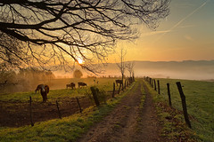 Rural Idyll (Rita Eberle-Wessner) Tags: landscape landschaft wiese meadow pasture weide rinder kühe cows cattle weg path feldweg zaun fence baum tree nebel fog tal valley hügel hills morning light morgenlicht frühling spring odenwald contrails kondensstreifen himmel sky