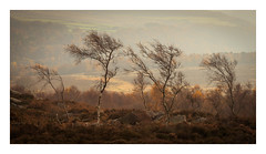 Over Owler Tor - November 15th (Edd Allen) Tags: thepeakdistrict peakdistrict autumn landscape trees treescape light nikond810 nikon d810 nikkor70200mm clouds country countryside serene bucolic atmosphere atmospheric moody ethereal grindleford lawrencefield