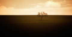 ... (a.penny) Tags: idsteiner land hessen idstein germany nikon d7100 panorama apenny baum