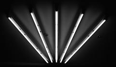 Light Fan (ckilger) Tags: leicam10 lowlight mannheim nacht night summiluxm11450asph leuchtstoffröhren fächer licht beleuchtung decke ceiling bw sw