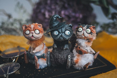 witchy persian cats (firexia) Tags: toy arttoy artdoll polymerclay sculpey sculpture cats cattoy catdoll miniature artist dollcollector collectiondoll collectiontoy persiaan cat witch witchy witchcraft cute cutie kawaii cutetoy etsy art homedecor designe crafttoy
