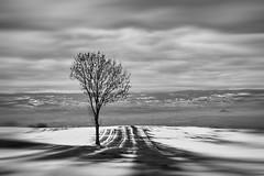 Semaphore (Ela F.) Tags: blackandwhite grey trees tree treesdiestandingup contrast clouds landscape winter lines snow bnw