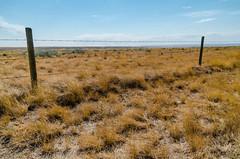 Saskatchewan Rangeland (Bracus Triticum) Tags: saskatchewan rangeland cummingsrestarea サスカチュワン州 canada カナダ 9月 九月 長月 くがつ kugatsu nagatsuki longmonth 2018 平成30年 fall autumn september