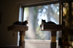 lazy day (peaceblaster9) Tags: cat window blur outoffocus sonyalpha7iii oldlens bokeh 猫 ネコ 窓 ボケフォト オールドレンズ