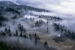 Northwest Morning (Darrell Wyatt) Tags: fog trees mist farm columbia river gorge