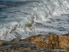 La Palma (peterkaroblis) Tags: lapalma water blue wave rock euphorbia espana spanien spain