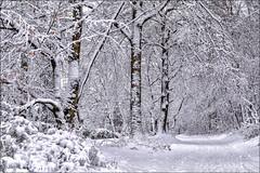 Untitled (Eva Haertel) Tags: eva haertel landschaft landscape natur nature wald forest woodland bäume trees winter wetter weather schnee snow frisch fresh weg path spazieren walk idylle idyll germany