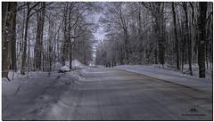 FEBRUARY 2016  NM1_8082_007864-1-222. (Nick and Karen Munroe) Tags: snow snowfall snowstorm snowy wintry winter winterwonderland fog foggy winterfog mist misty fogpatches karenick23 karenick karenandnickmunroe karenandnick munroe karenmunroe karen nickandkaren nickandkarenmunroe nick nickmunroe munroenick munroedesigns photography munroephotoghrpahy munroedesignsphotography nature landscape brampton bramptonontario ontario ontariocanada outdoors canada d750 nikond750 nikon ice icecrystals icestorm icefog nikon1424f28 1424 1424f28 nikon1424 nikonf28 f28 colour colours color colors