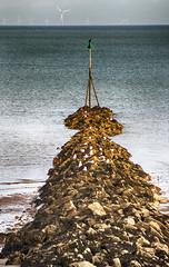 Bird breakwater (Gill Stafford) Tags: gillstafford gillys image photograph wales northwales conwy rhosonsea breakwater gulls birds