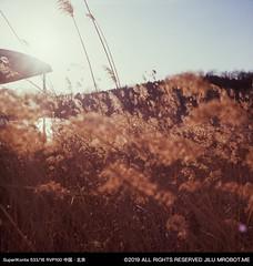 fullsizeoutput_1963 (magi_go) Tags: olympicforestpark beijing film
