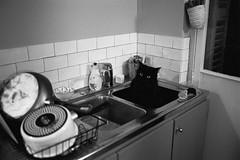 (cedricmarino) Tags: film analog monochrome nikon fm2 trix400 1600 xtol 11 cat funny black kitchen 35mm