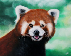 Panda roux / Red Panda (Kalisan12) Tags: animalpainting peintureacrylique acrylicpainting redpanda pandaroux originalphotobymathiasappel kalipeinture