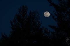 Last Night (koperajoe) Tags: night moon astronomy bluehour fullmoonlunar