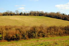 Across the downs (zawtowers) Tags: london loop section 5 five hamseygreentocoulsdonsouth walk amble stroll walking exploring outer suburbs green spaces sunday 24th march 2019 warm dry sunny afternoon blue skies sunshine across surrey downs view hills trees calm peaceful serene