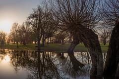 Überschwemmung - flood (Rafael Zenon Wagner) Tags: flood flut flus evening abend sonnenuntergang sundown wasser water reflection spiegelung