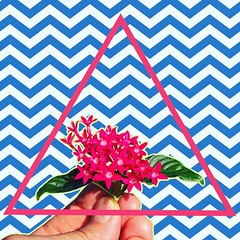 I Tried Angles (ToGa Wanderings) Tags: closertotheedit romantic new love beautiful playful groovy fun lines abstract pink blue bouquet pinch fingers cover than stranger flowers electro punk post wavey wave newwave edit triangle