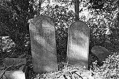 General Cemetery  Monochrome (brianarchie65) Tags: generalcemetery cemeteries graves grave hull geotagged brianarchie65 kingstonuponhull springbankwest headstones brokenheadstones ngc canoneos600d tress bushes shrubs undergrowth shadows