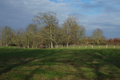 A winter walk from Faversham to Boughton-under-Blean. (favmark1) Tags: winter walk faversham boughtonunderblean horses