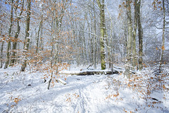 Episode neigeux (Fabien Husslein) Tags: neige snow freiseng frisange luxembourg letzebuerg forest foret arbres trees hiver winter wonderland