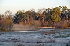 _IMG4419 (Hendricus M. de Regt) Tags: the netherlands gelderland natuur nature landscape grass bos forest trees zonsopkomst sunset swamp nederland veluwe landschap gras water bomen moeras
