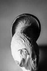 Eringi (tokyobogue) Tags: tokyo japan nikon nikond7100 d7100 tokina tokina100mmf28atxprod macro blackandwhite blackwhite monochrome mushroom eringi lines shadows