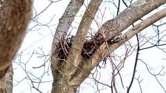Empty Nest (blazer8696) Tags: 2019 brookfield ct connecticut ecw hdr img386789realistic obtusehill t2019 tabledeck usa unitedstates nest raptor
